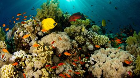 Underwater Beauty - sunshine, blue, corals, gold, fishes, beautiful, underwater, yelloe, sea