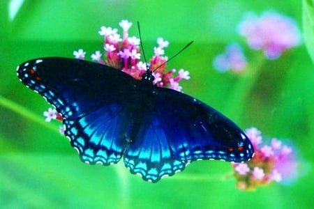 Black and blue - spotted, butterfly, green, flowers, black, blue