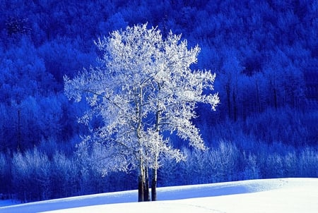 Winter - beauty, tree, winter, blue