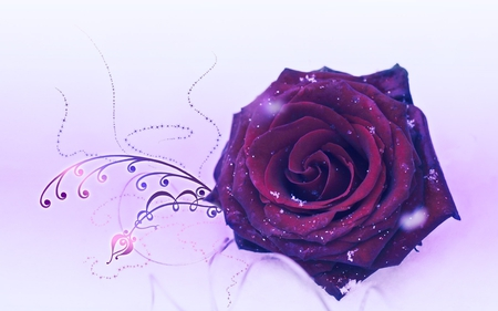 Purple Rose - white f...