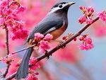 A spring song for Shebina