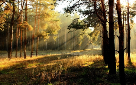 bright beautiful nature - photography, sun, rays, sunlight, beauty, nature, sunshine