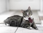 Scholarly Cat