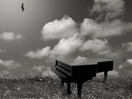 LET YOUR THOUGHTS FLY - thoughts, fly, bird, ideas, music, creative, sky, piano