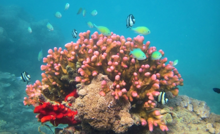 Coral head fish home - ecology, reef, fish, coral, nature, red sea
