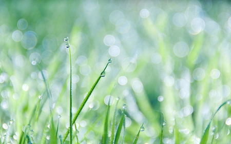 Grass And Dew - dew, nature, green, grass