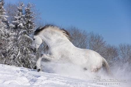 Winter Is Coming Horses Animals Background Wallpapers On