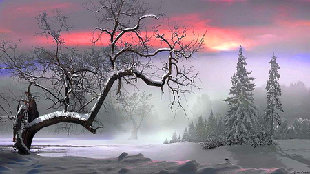 Cold rest - tree, snow, sunset, barren, winter, cold, mist