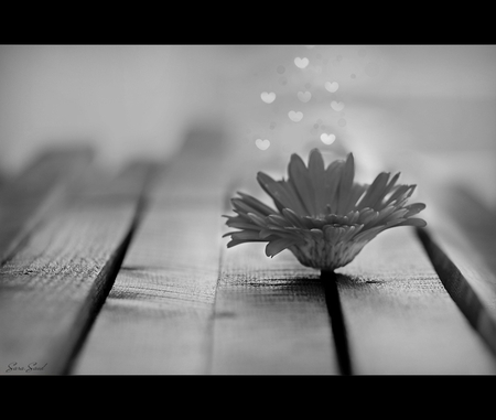 ROOM FOR MORE - hope, photography, bw, love, flower, hearts