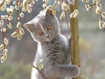 kitty on a branch