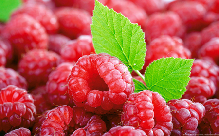 Raspberries - nutrition, raspberries, food, nature