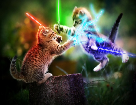 Kitty Skywalker vs. Meow Vader - pretty, wonderful, stunning, tree stub, beautiful, adorable, science fiction, animal, sweet, nice, outstanding, skywalker, laser sword, animals, amazing, war, force, fantastic, star wars, kitty, cat, cute, battle, lightning, skyphoenixx1, fight, awesome, nature, vader, cats, kitten, kitty skywalker vs meow vader