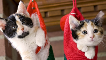 cats in socks - pretty, wonderful, stunning, socks, beautiful, adorable, animal, sweet, nice, outstanding, carmine, cats in socks, animals, amazing, fantastic, kitty, kittens, cat, cute, skyphoenixx1, awesome, cats, kitten