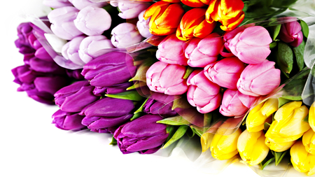 Colorful Tulips - beauty, lovely, colorful, yellow, flowers, spring, yellow tulip, pretty, tulips, yellow tulips, red, beautiful, purple tulip, purple tulips, nature, pink, red tulips, bouquet, purple, romance, still life, red tulip, colorful tulips, colors, romantic, photography, pink tulip, tulip, spring time, pink tulips