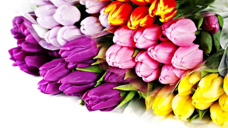 Colorful Tulips - colorful, photography, pink, romantic, red, tulip, pink tulip, colorful tulips, red tulip, purple tulip, flowers, spring time, colors, tulips, nature, yellow, beauty, bouquet, beautiful, yellow tulips, lovely, purple tulips, purple, pink tulips, spring, romance, still life, pretty, red tulips, yellow tulip
