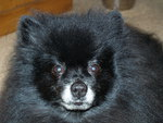 Bearman Baby