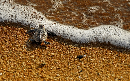 Adventure of a lifetime begins... - turtle, sea, sand, adventure, animals, begins, life, ocean, beach, lifetime, frog, live