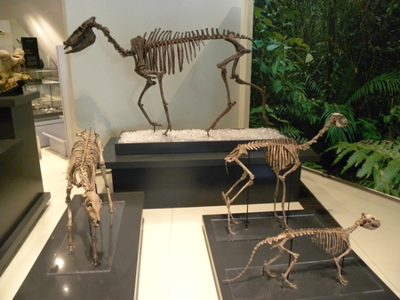 Day at The Royal Ontario Museum,TO,Ontario - bones, ancient, animals, dinosaurs