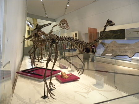 Day at The Royal Ontario Museum,TO,Ontario - museum, dinosaur, ancient, animals