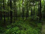 Green Woodland