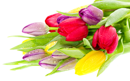 Tulips - colorful, photography, romantic, red, tulip, colorful tulips, drops, red tulip, purple tulip, flowers, colors, tulips, nature, yellow, drop, beauty, bouquet, beautiful, yellow tulips, lovely, purple tulips, purple, romance, still life, pretty, red tulips, yellow tulip