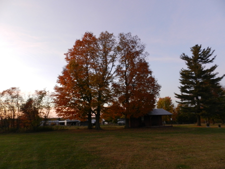 Early Fall Evening - fall, tree, autumn, evening