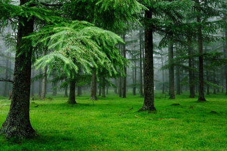 Beautiful Forest - beauty, beautiful, forest, green, tree, sweet