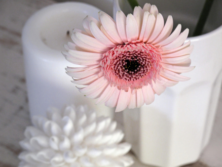 Once In A While... - fashion, entertainment, light, white, wonderful, candle, vase, pale pink, bright, flower, forever, gerbera, love
