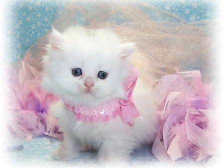 baby of persian cat - cute, persian, breed, cat, kitten, animal