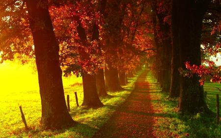 MISTY PATHWAY - sunlight, field, trees, fence, alley