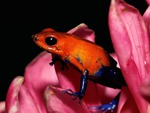 COLOURFUL TREE FROG