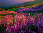 Floral field at sunset
