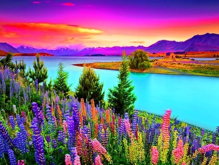 Flowers at sunset - sunrise, colorful, flowers, sunset, sky, colors, water, nature, river, sundown, clouds, lupin, floral, beach, shore