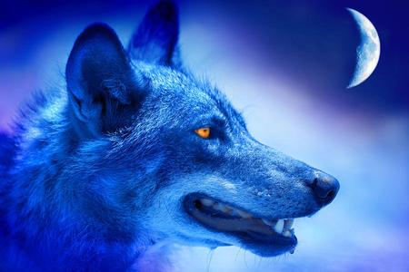 Alpha Wolf Other Animals Background Wallpapers On Desktop Nexus Image 995948