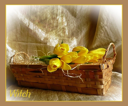 spring package - basket, sunlight, flowers, yellow, nature, package, roses, floral