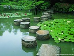 Stone Lilypads to Stairs