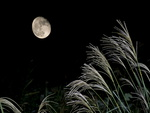 Full Moon Night. Wooooowwww!