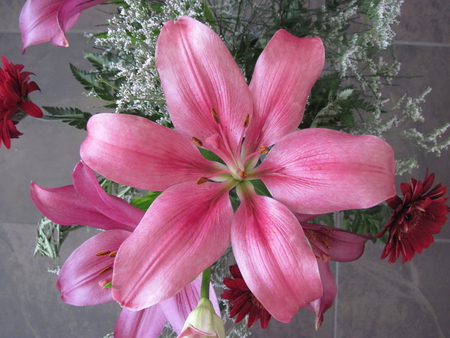 Pink lily - flowers, white, photography, pink, lily, green, red