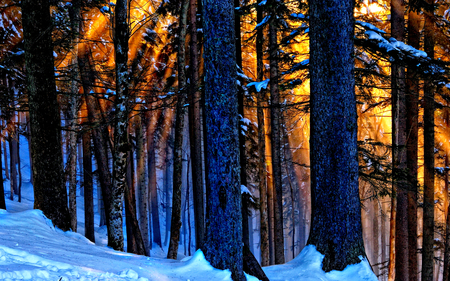 Sunlight - pretty, sun, woods, sunbeams, beautiful, sunset, snowy, splendor, beauty, sunrise, light, forest, lovely, view, sunlight, colors, winter time, trees, winter splendor, winter, tree, sunrays, rays, snow, peaceful, nature, landscape