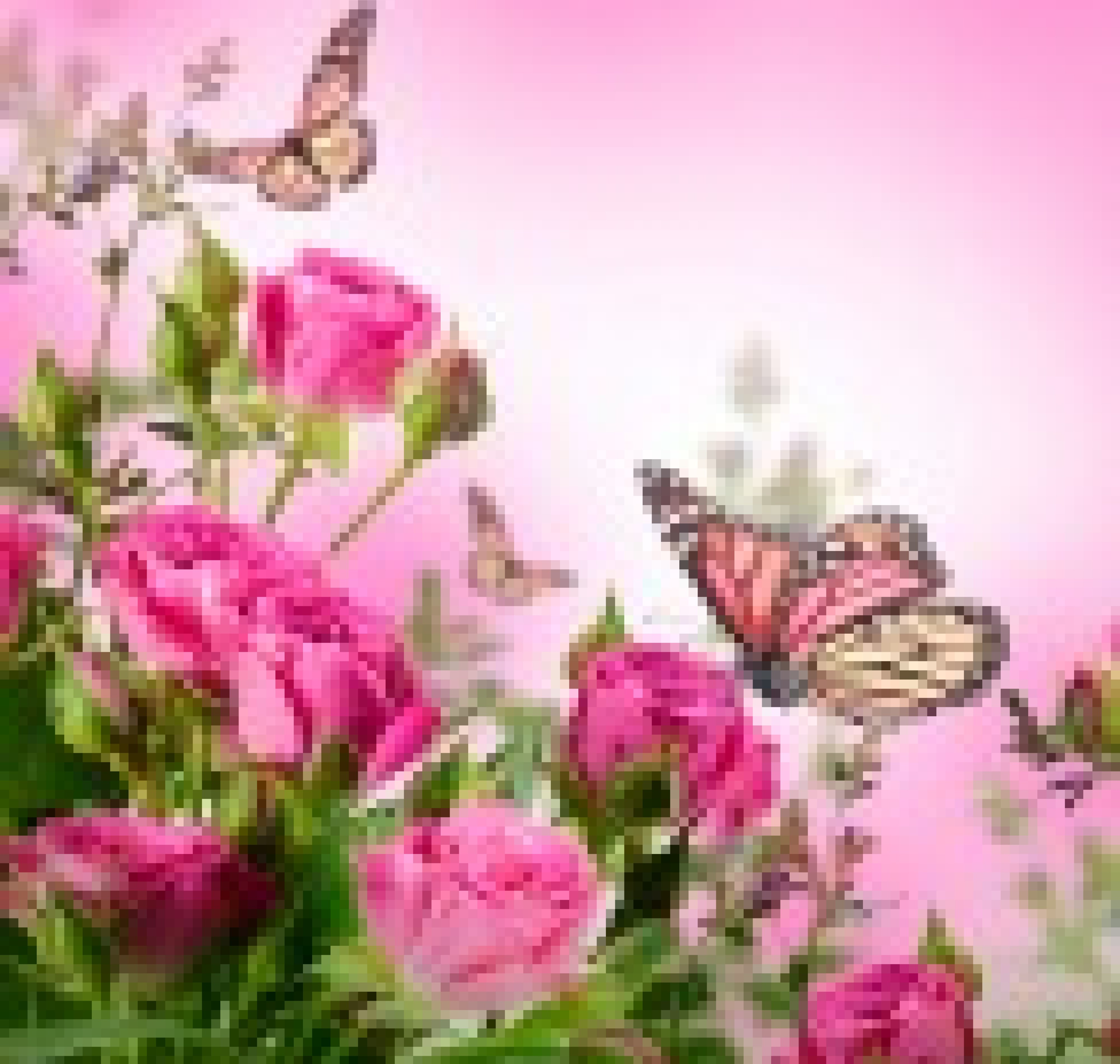 beautiful spring flowers and butterflies Forever Alone Wallpaper